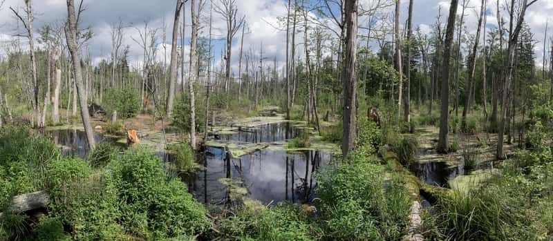 Marsh Bialowieza Forest Forest Water Poland