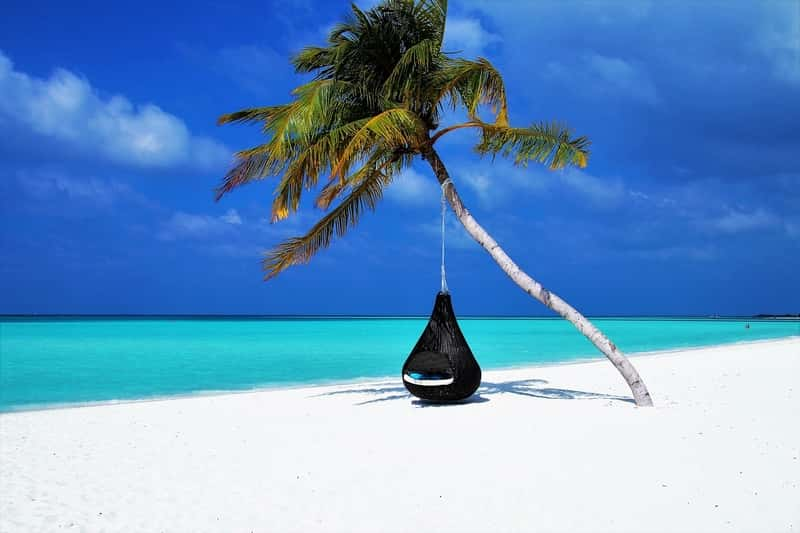 Find Cheap Flights and Hotel - Exotic Beach with one Palm Tree and a swing chair